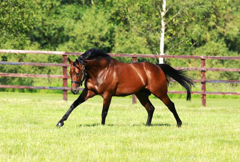 SIRE REVIEWS: Sea The Stars : Standing at Gilltown Stud