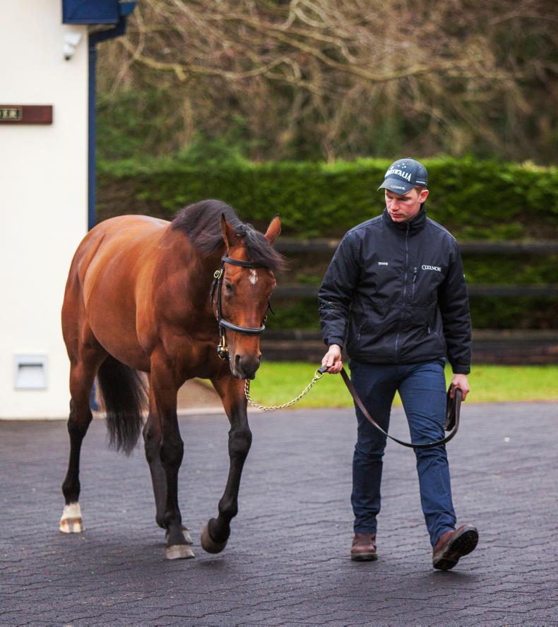 SIRE REVIEWS: Zoffany : Standing at Coolmore Stud