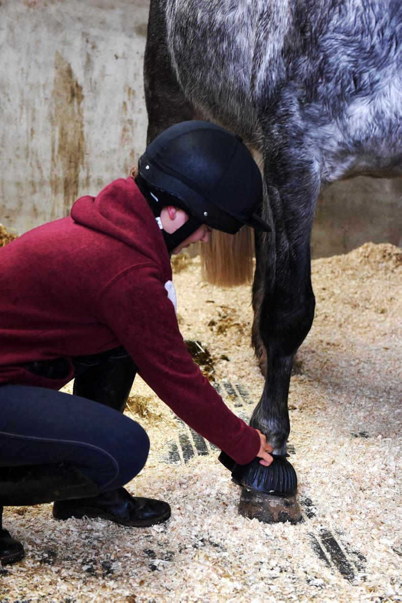 NEWS:  CAFRE - free online equestrian safety course