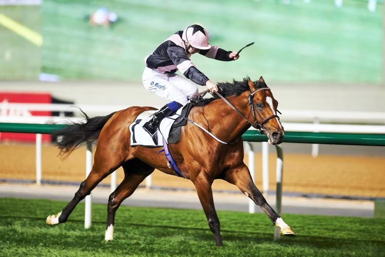 Hit The Bid makes the frame behind top sprinters in Dubai