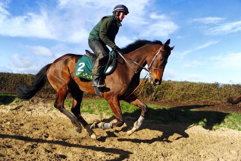 Douvan 'doing everything right' as optimism grows for Cheltenham Festival return