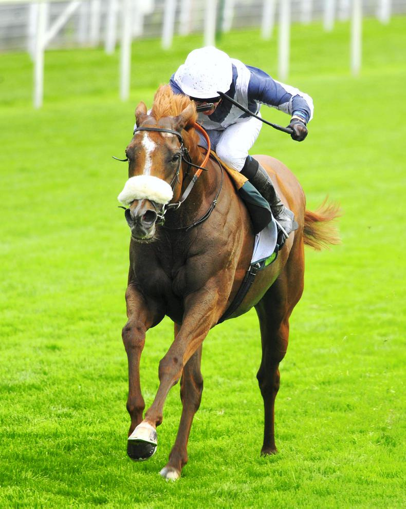 SIRE REVIEWS: Ulysses : Standing at Cheveley Park Stud