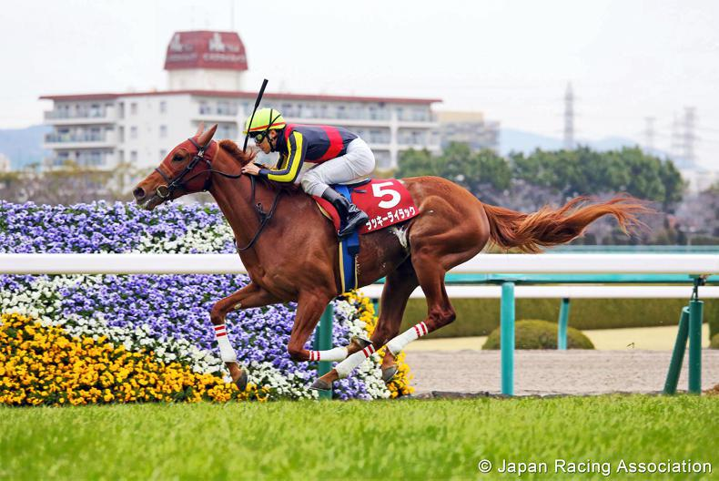 JAPAN: Juvenile form holds true for Lucky Lilac