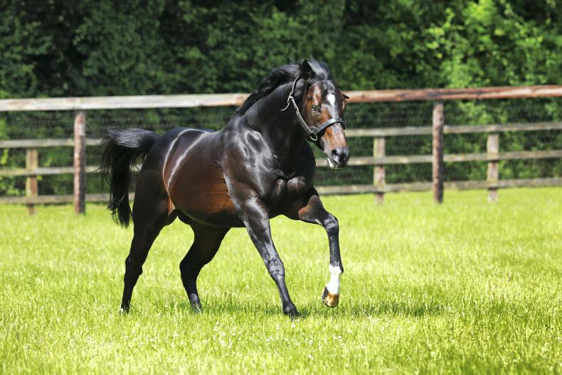 SIRE REVIEWS: Bated Breath : Standing at Banstead Manor Stud