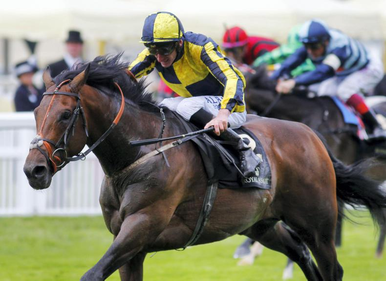 SIRE REVIEWS: My Dream Boat : Standing at Bridge House Stud