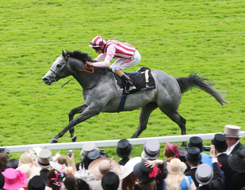 SIRE REVIEWS: Lethal Force : Standing at Cheveley Park Stud