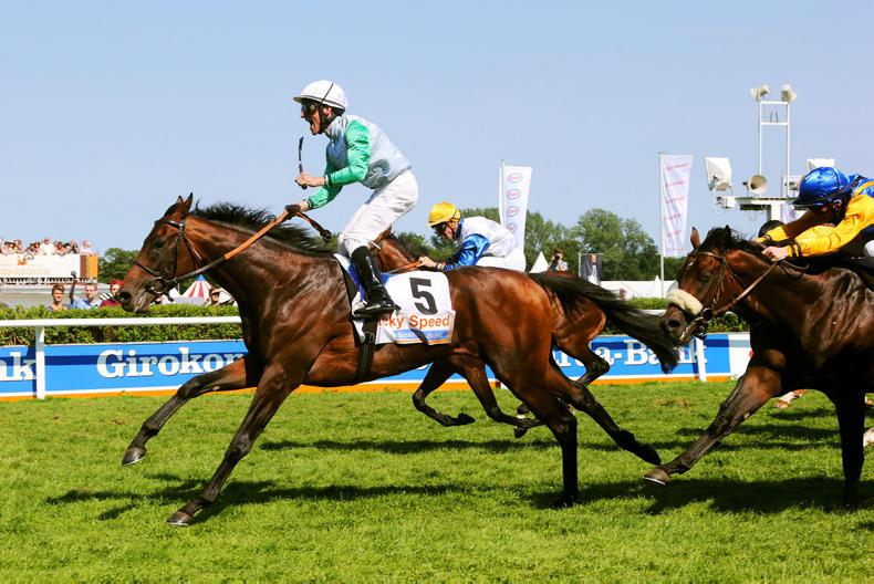 SIRE REVIEWS: Lucky Speed : Standing at Sunnyhill Stud