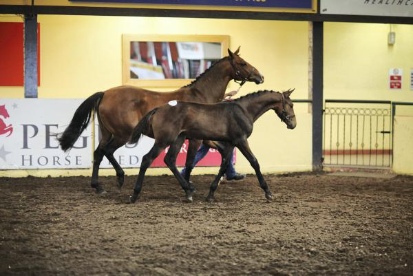 Commercial appeal to elite foal entry