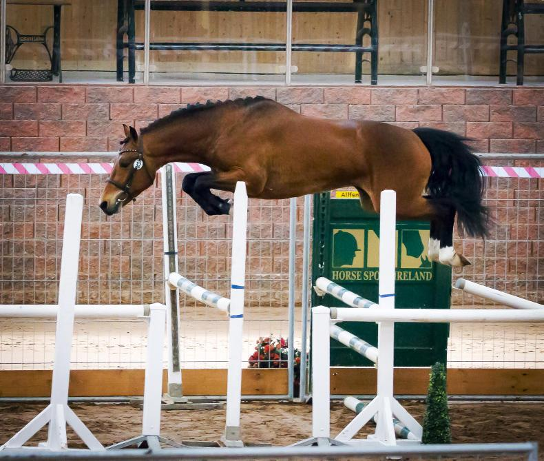 NEWS:  29 stallions up for inspection at Cavan EC