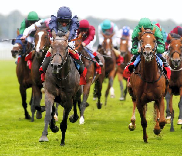 Kingston rules in St Leger