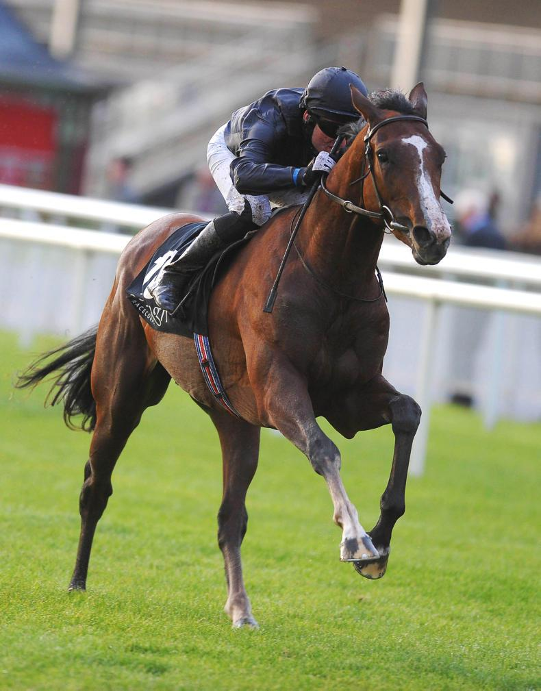 SIRE REVIEW: Imperial Monarch : Standing at The Beeches Stud