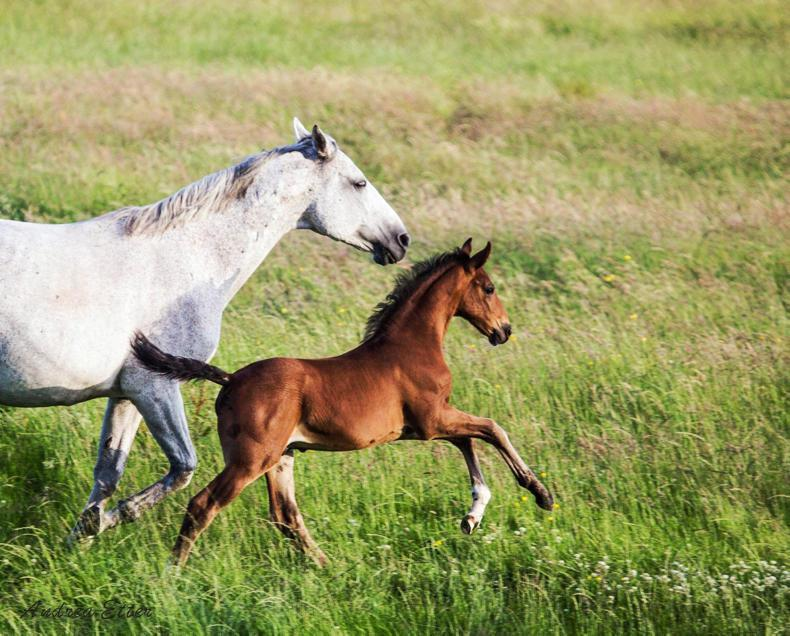 BREEDING GUIDE 2018:  HSI developing new tools for breeders