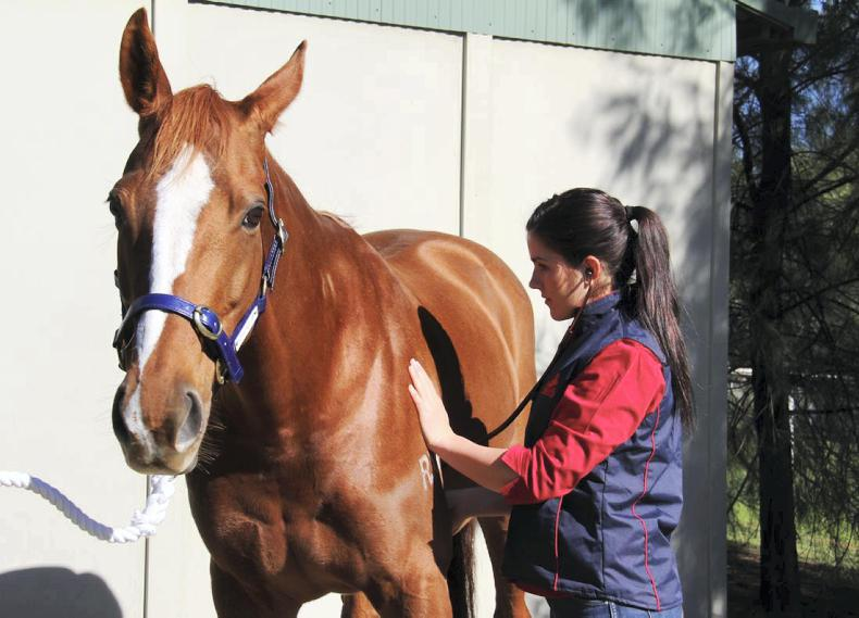 HORSE SENSE: Equine learning theory:  'don't break your vet'