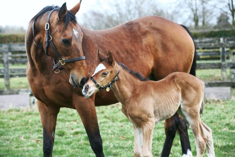 Full-sister to Frankel born