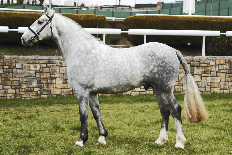 NEWS: 14 stallions passed at HSI inspections