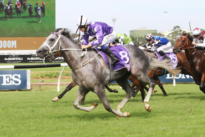 AUSTRALIA: D'Argento gives Waller and Bowman Group 1 double