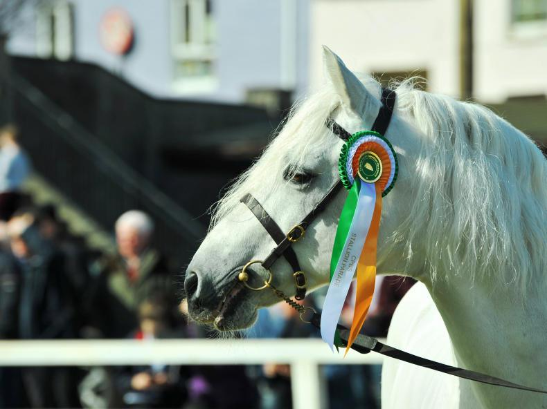 Irish Horse World Fixtures, March 31st 2018
