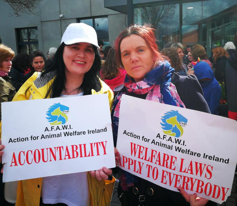 NEWS: Close to 300 march for animal welfare in Clonmel