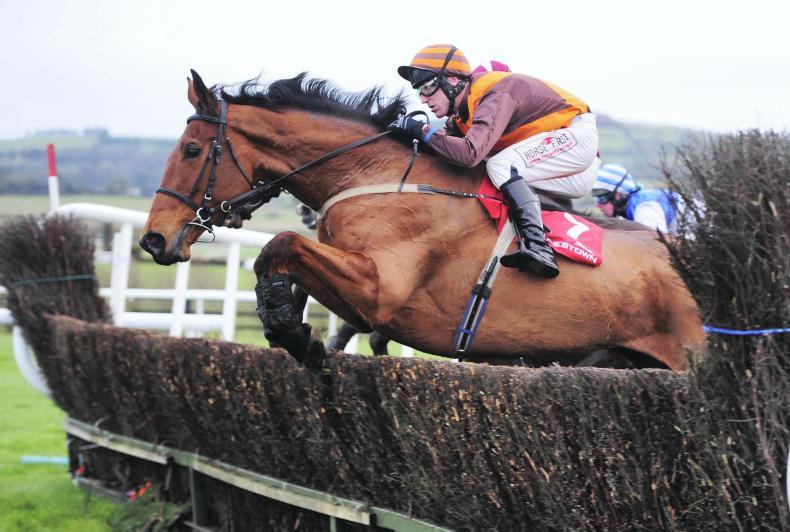 Sumos Novios shines for Burke father-son combination at Cork