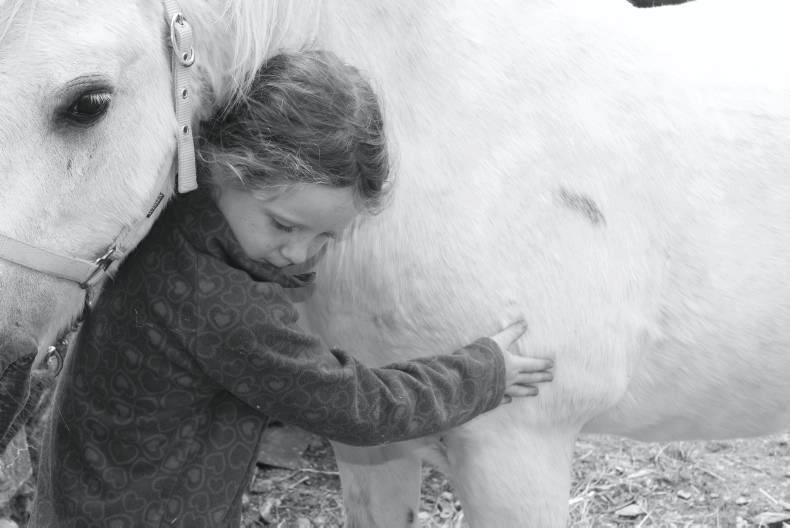 HORSE SENSE: Our equine welfare responsibilities