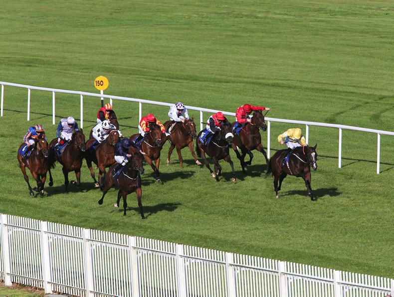 Sunday's Naas card in doubt as track team anticipate further rain