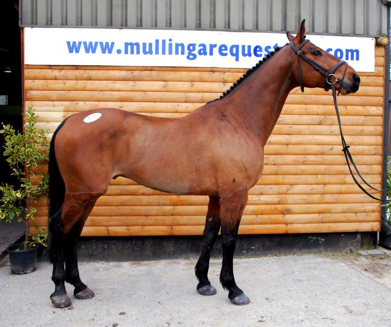 SALES: Lively trade returns top price of €11,100