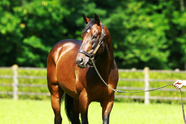 Youmzain moves to Rathbarry's Glenview Stud