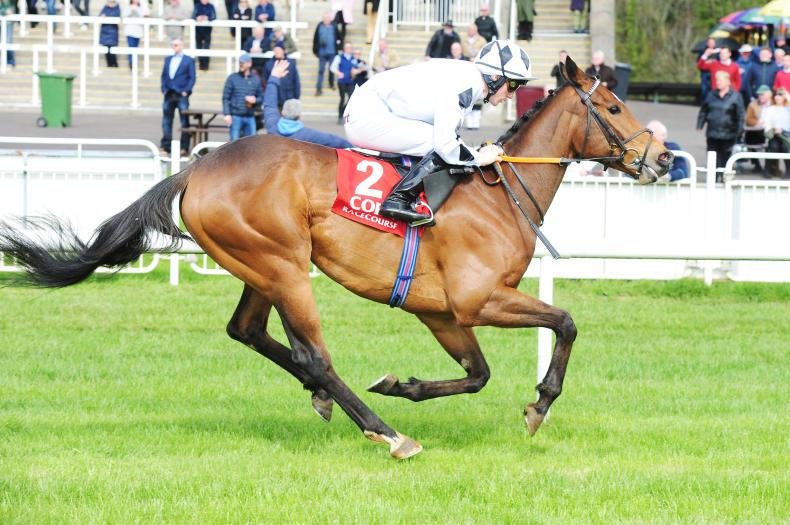 Trailblazing Downforce powers to Listed success at Navan