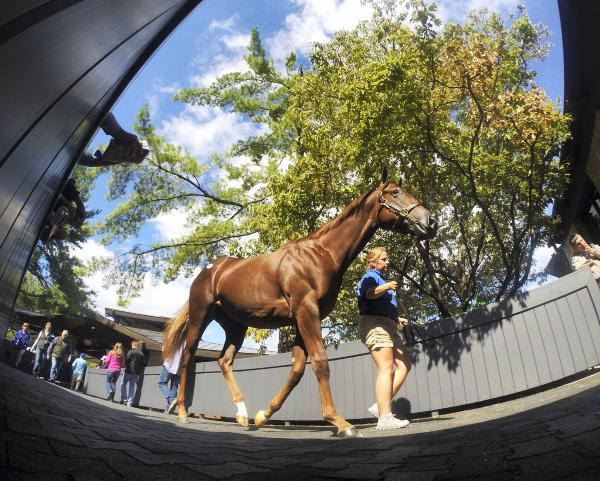 Keeneland Sale totals just shy of 2013 figures