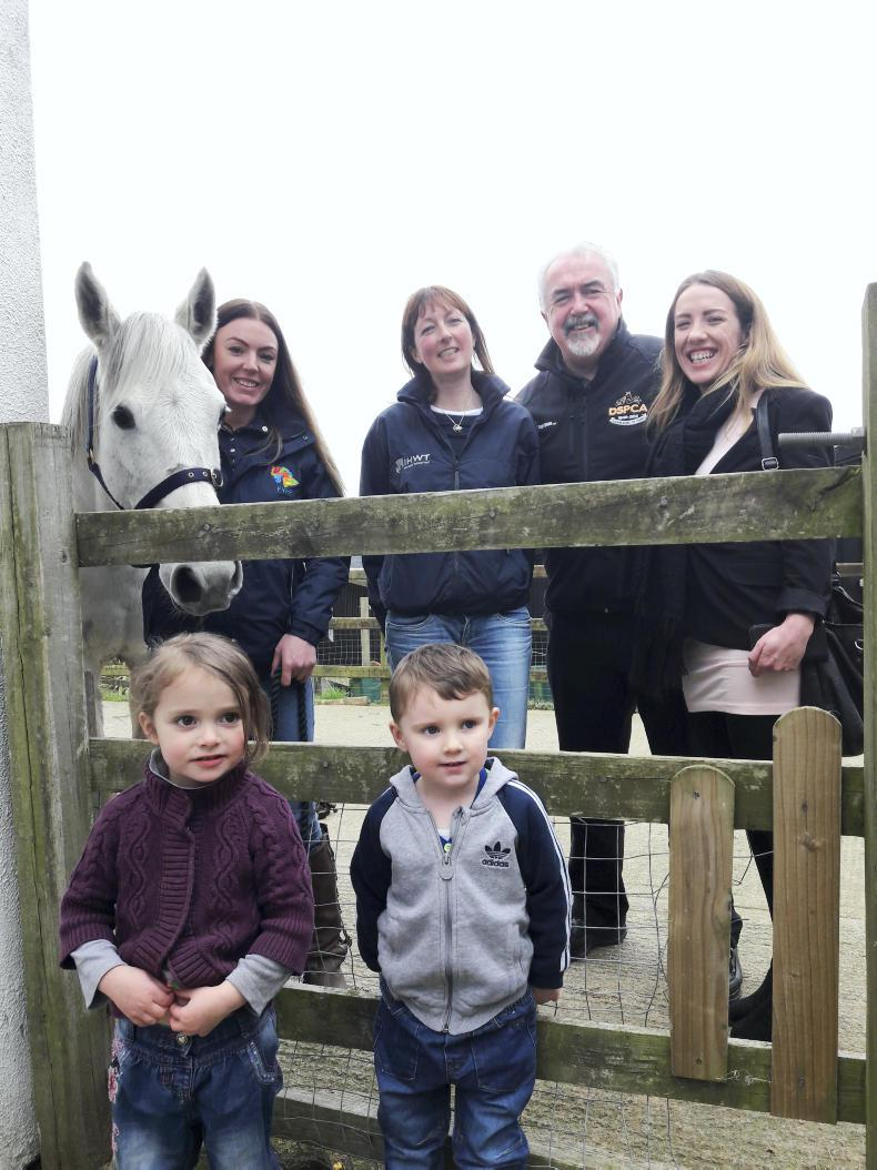 PONY TALES:  Horse Aware Week launched