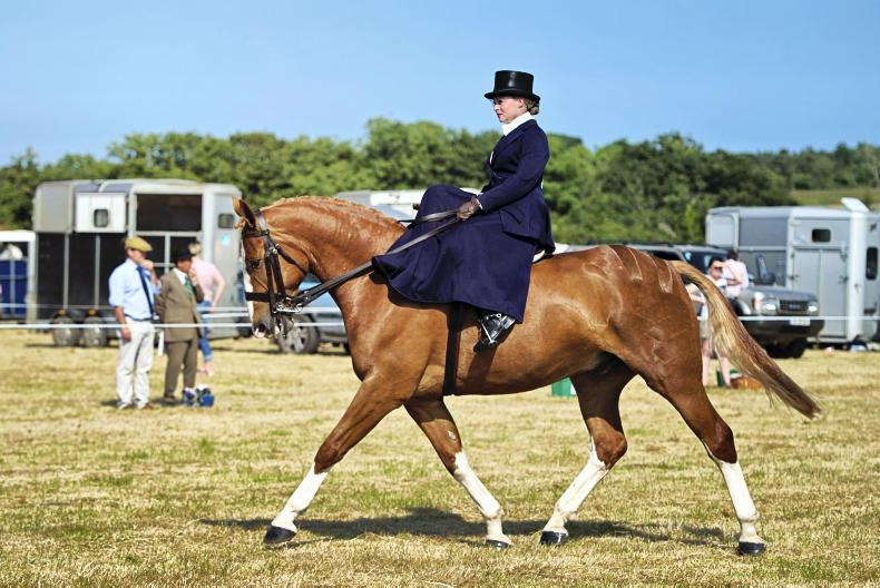 HORSE SENSE: 'No bling in the ring!'