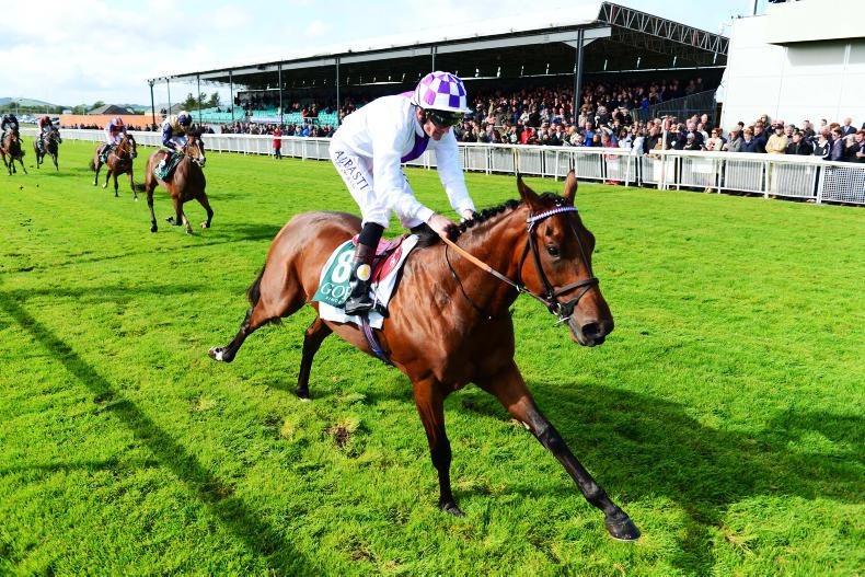 Verbal Dexterity out of 2000 Guineas picture