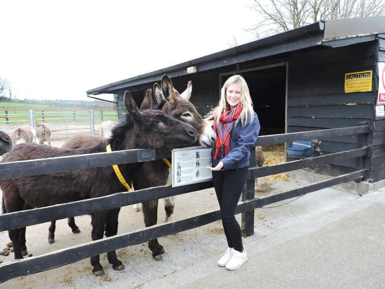 FEATURE:  Donkeys for days!