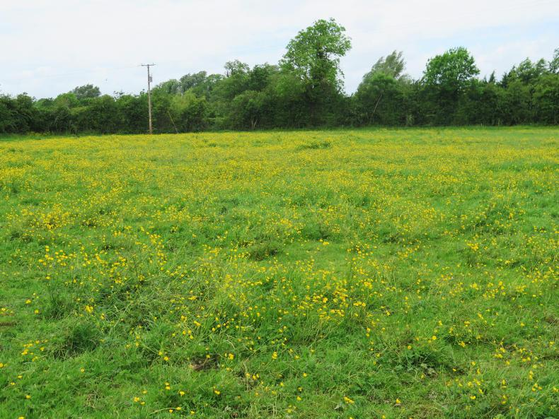 GRASSLAND: Weed control options for paddocks