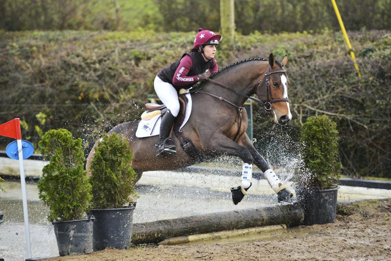 SALES PREVIEW: Strong pony entry for Cavan Sales