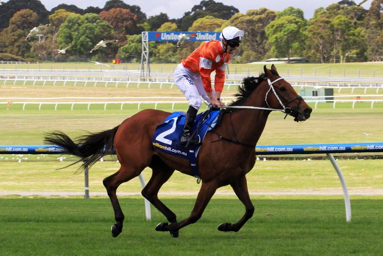 AUSTRALIA: Who Shot Thebarman is the toast of Randwick